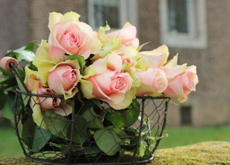 zahrada, léto, květiny, bílá růže, příroda, aranžmá, růžová, okvětní lístek