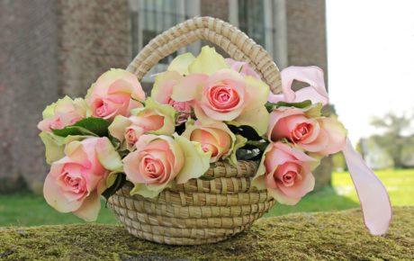 květina, příroda, košík, ratan, růžová, tráva, rostlina