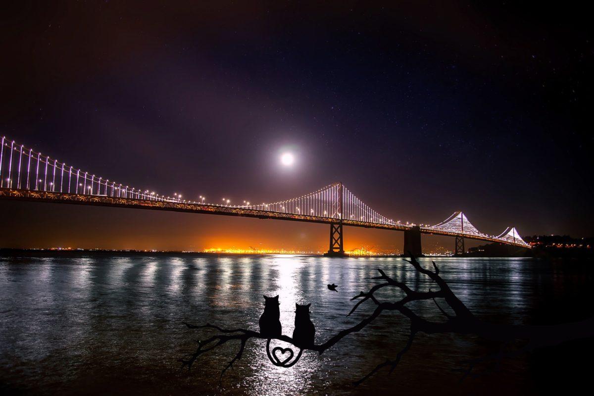 water, bridge, river, night, reflection, city, urban, coast