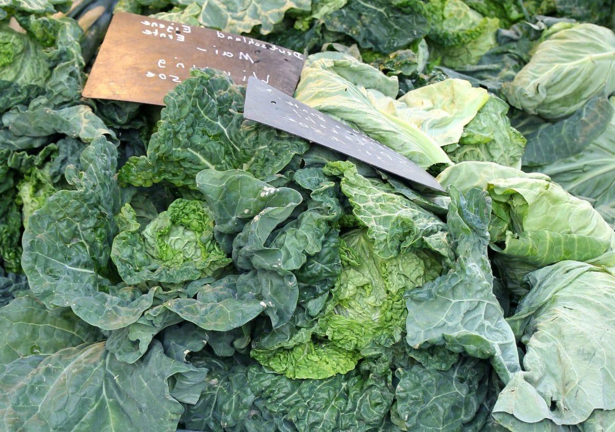 food, cabbage, leaf, garden, vegetable, agriculture