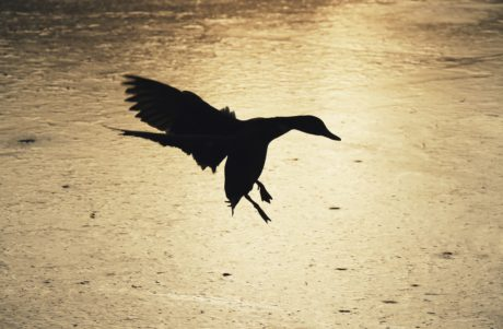 bird, water, beach, wildlife, wild, flight, shadow