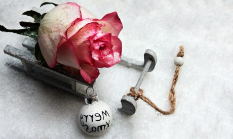 rose, holiday, petal, winter, decoration