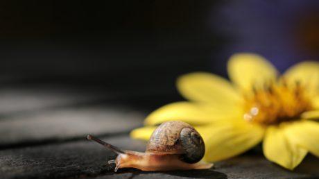 naturaleza, jardín, caracol, gasterópodos, invertebrados, animales, concha