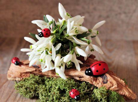 ladybug, plant, insect, flower, beetle