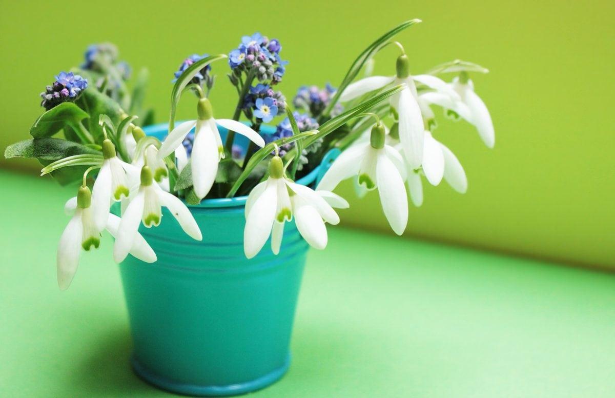 flower, bouquet, green leaf, nature, vase, plant, still life