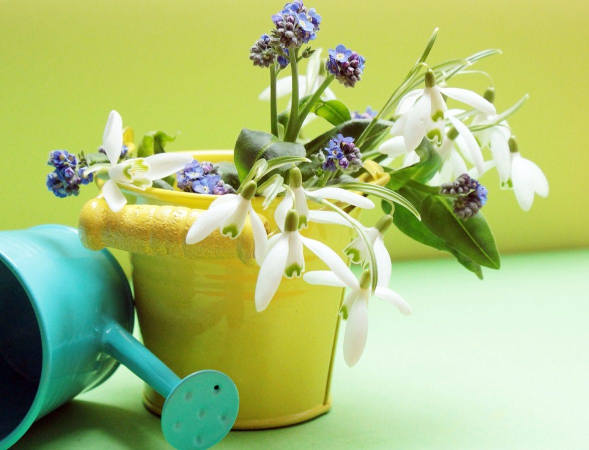 Blume, Natur, Blatt, Pflanze, Indoor