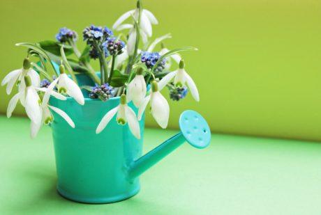 vaso, flor, natureza, folha, interior