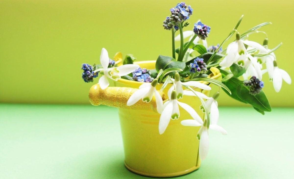 natur, blad, blomst, pot, vase, indendørs