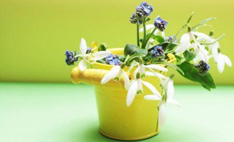 Doğa, yaprak, çiçek, pot, vazo, kapalı