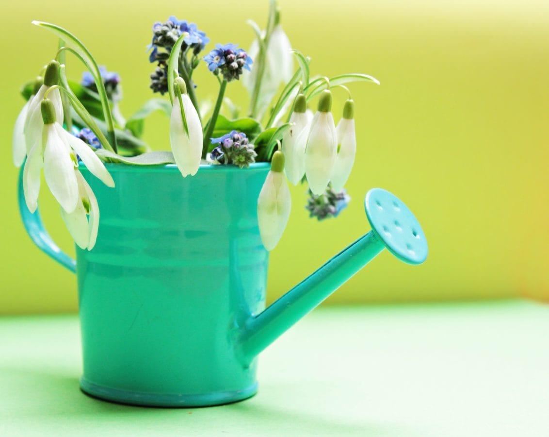 natur, blad, have, vase, pot, blomst, kop, indendørs
