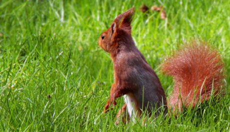 green grass, cute, squirrel, rodent, animal, fur, wildlife