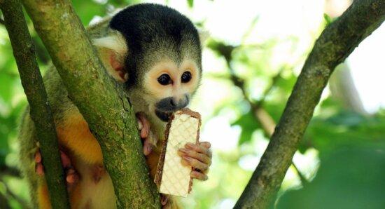 nature, tree, monkey, primate, wildlife, wild, animals, animal