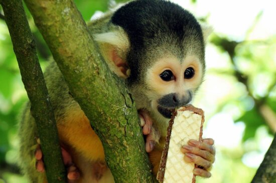 monkey, tree, nature, wildlife, jungle, primate, cute, wild