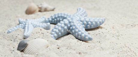 Costa, Shell, estrellas de mar, océano, sea, arena, Seashell, playa