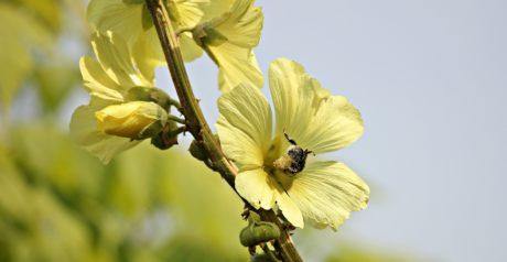 blomst, blad, sommer, natur, plante, urt, hage