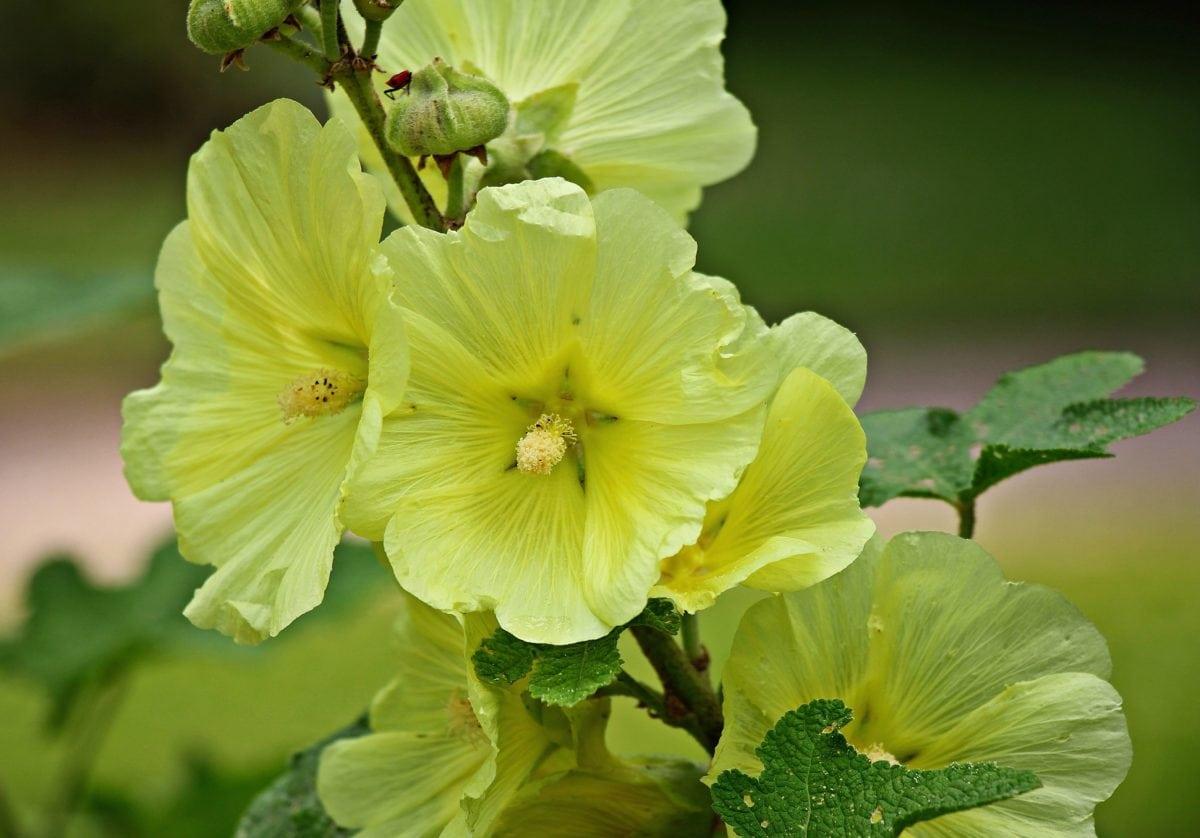 garden, leaf, nature, summer, flower, petal, plant