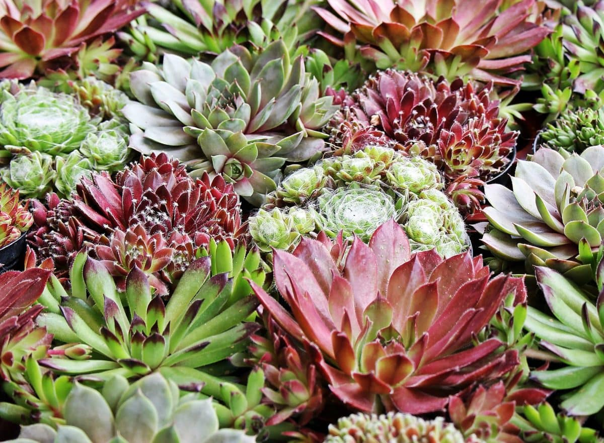 beautiful, flower, leaf, garden, nature, plant, blossom