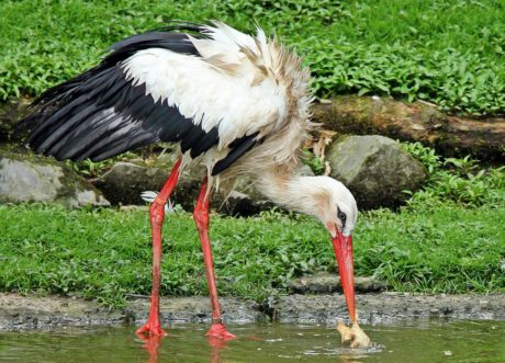 beak, feather, nature, stork, bird, animal, wildlife, wild