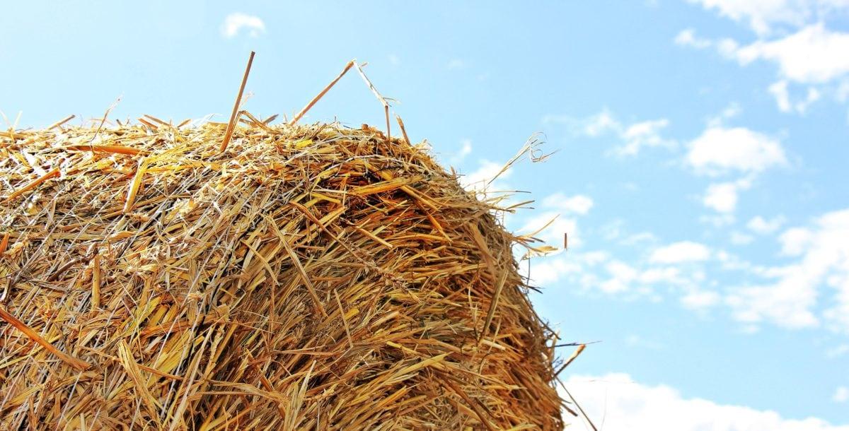 halm, korn, landbrug, natur, felt, fødevarer, sommer, landskab, blå himmel