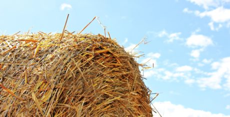 straw, cereal, agriculture, nature, field, food, summer, countryside, blue sky