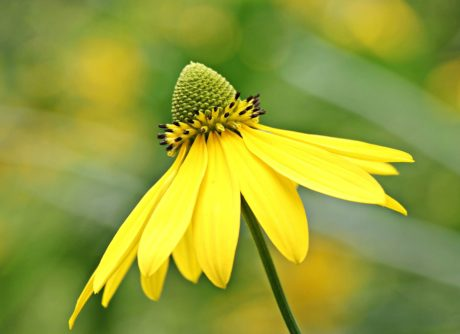 summer, leaf, flower, nature, sunflower, plant, herb, petal