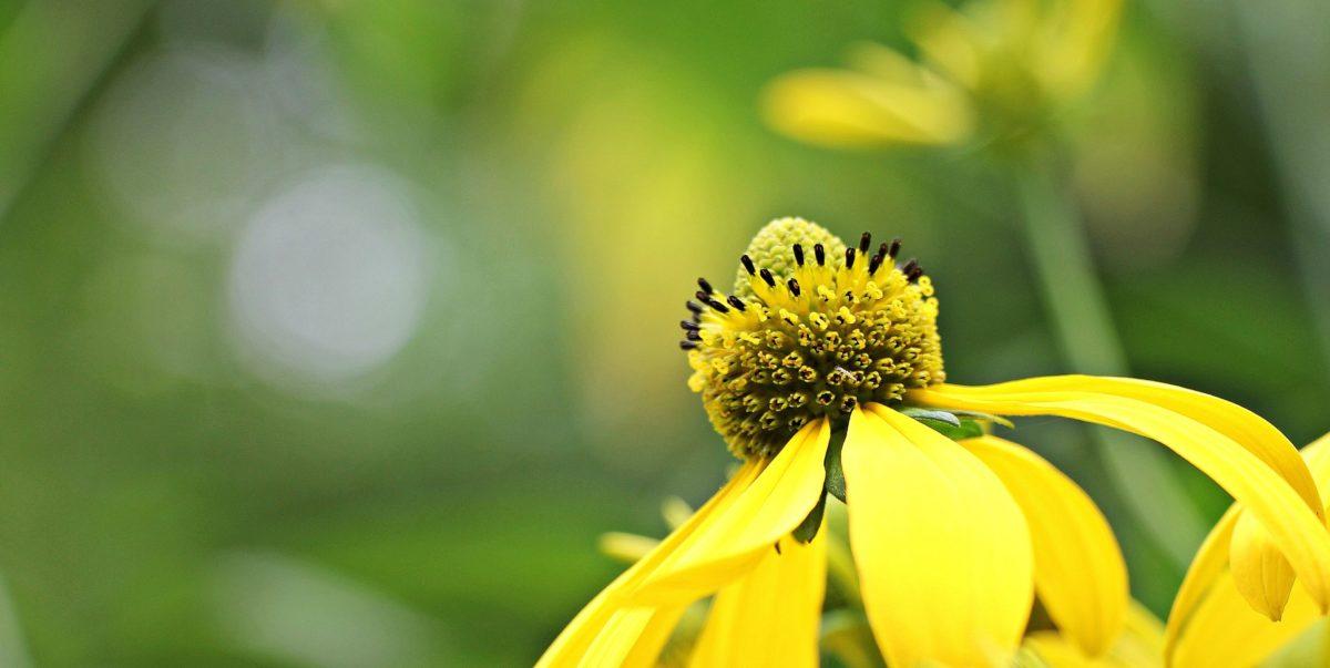 summer, nature, flower, sunflower, plant, petal