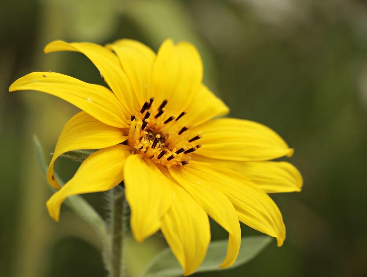 flower, nature, summer, sunflower, plant, petal, blossom