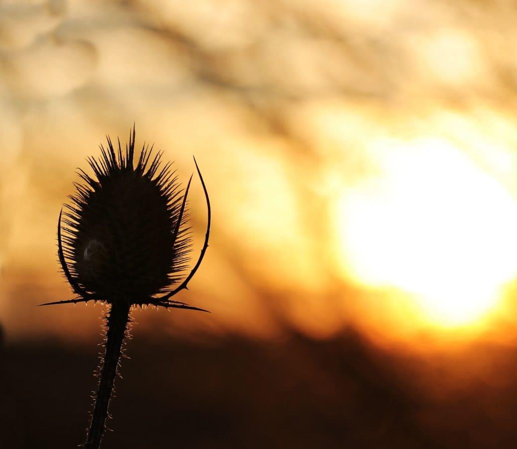 自然, 花朵, 植物, 太阳, 天空