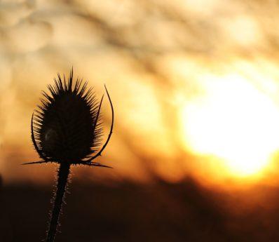 natur, blomst, himmel, plante, sol