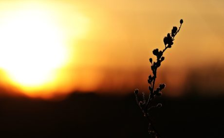 Sol, natur, solnedgang, daggry, silhuet, plante, himmel