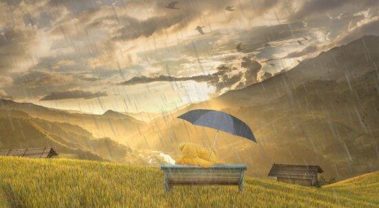 puesta del sol, paisaje, paraguas, cielo, hierba, campo