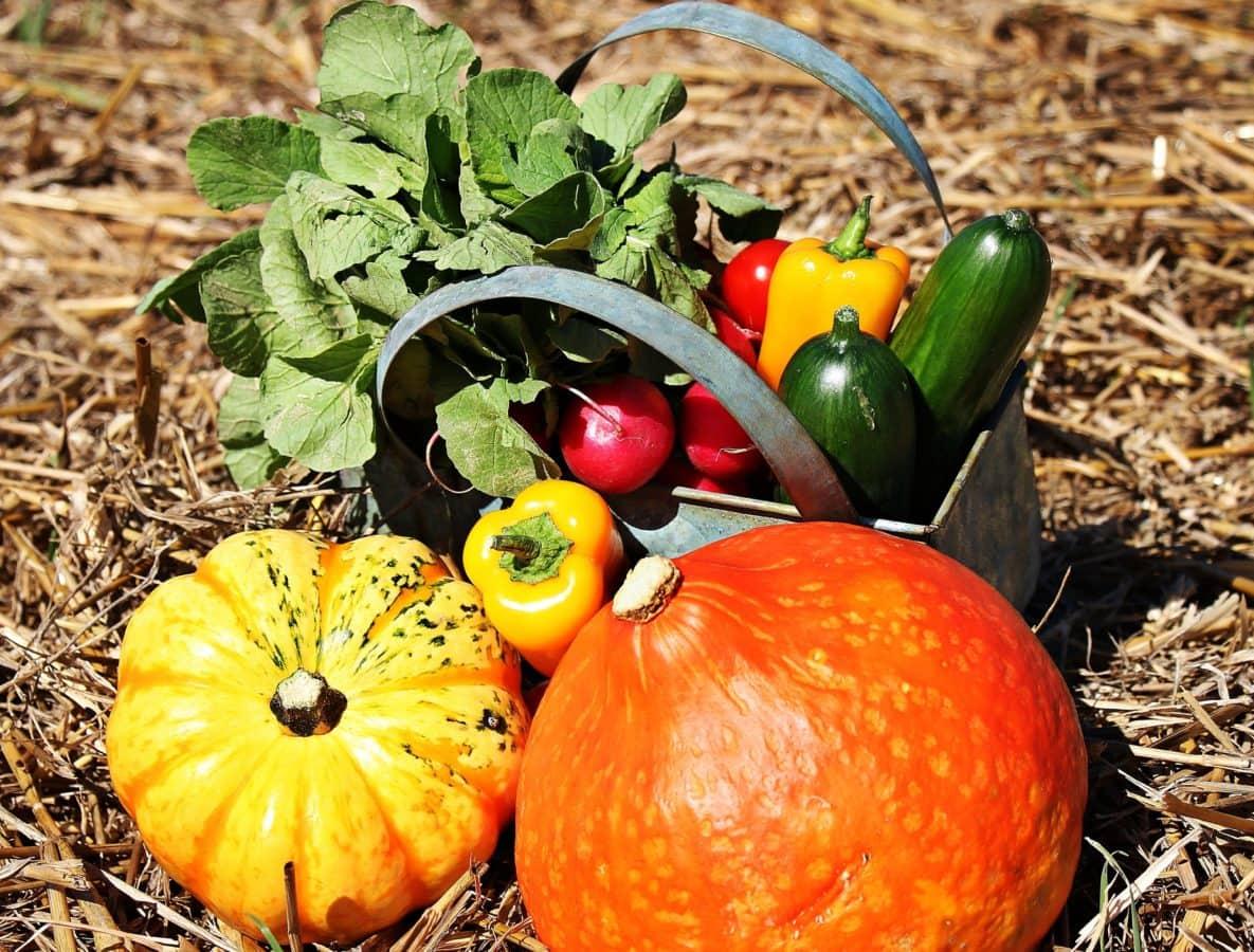 vegetabilsk, blad, gresskar, mat, høst, paprika, agurk, landbruk