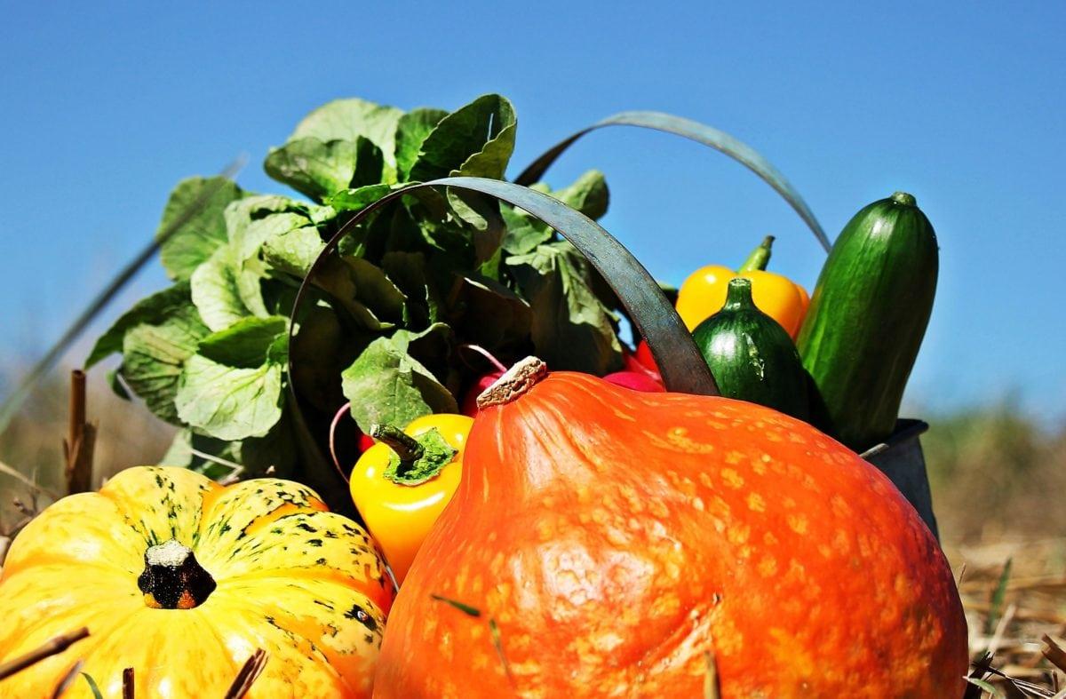 natuur, eten, pompoen, groente, tomaat, herfst, paprika, salade, komkommer