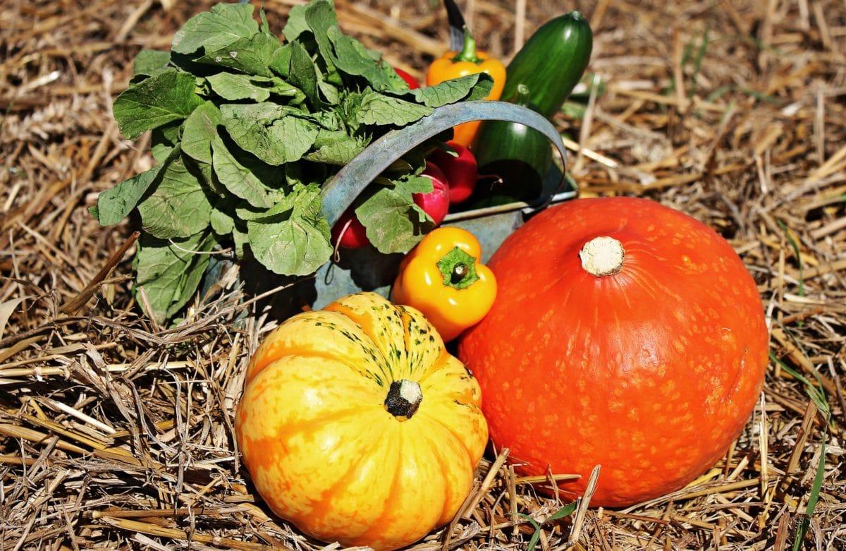 liści, warzyw, dyni, żywności, jesień, papryka, Sałatka, ogórek, roślin