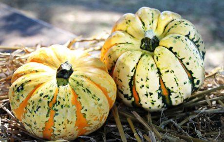 カボチャ、野菜、オーガニック、食品、秋、植物