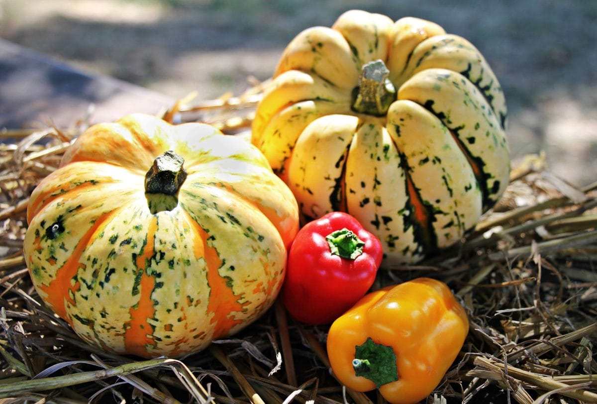 pumpkin, halloween, food, vegetable, autumn, paprika, agriculture