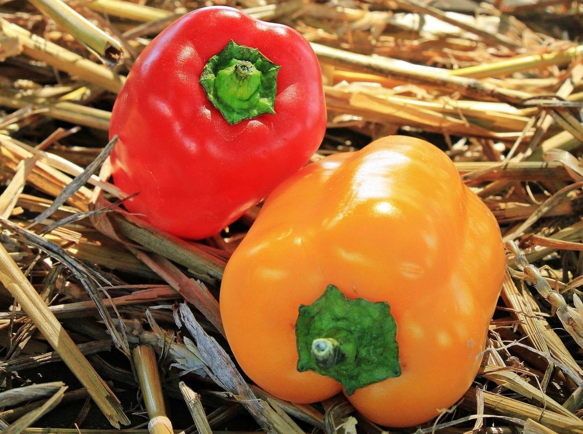 bell pepper, food, paprika, vegetable, diet, vegetarian