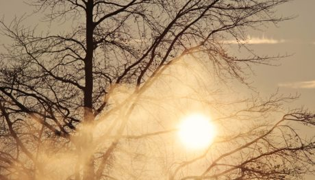 fog, branch, dawn, sun, wood, landscape, winter, nature, tree