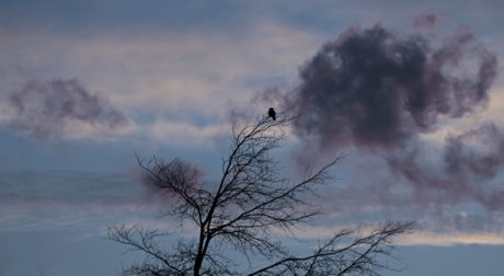 nature, crow, landscape, winter, sunrise, dawn, mist, tree