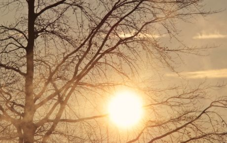 wood, nature, dawn, winter, landscape, tree, sunset, sun