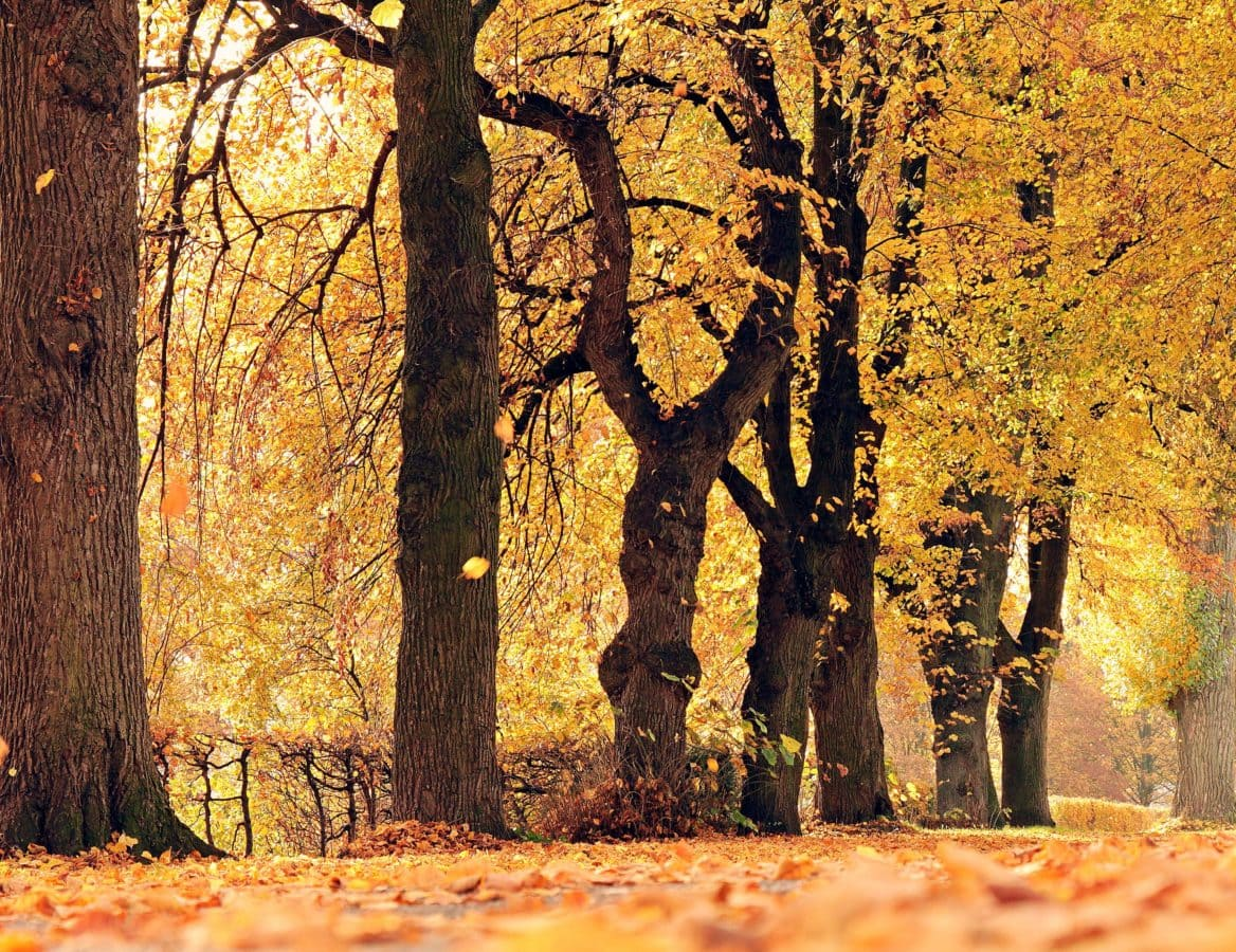 wood, landscape, leaf, nature, fence, autumn, forest, tree