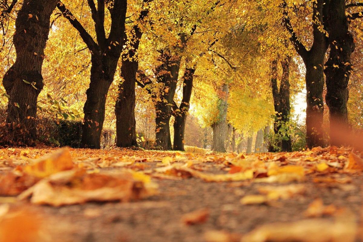 lá, gỗ, thiên nhiên, cây, mùa thu, rừng, lá,