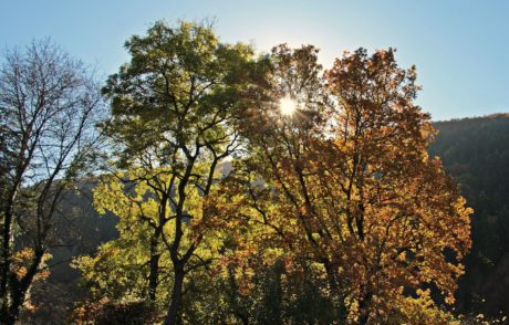 leaf, tree, nature, wood, landscape, autumn, forest, sun, blue sky