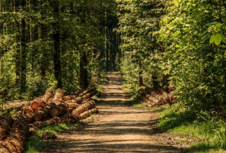 forest road, nature, wood, tree, landscape, leaf, environment