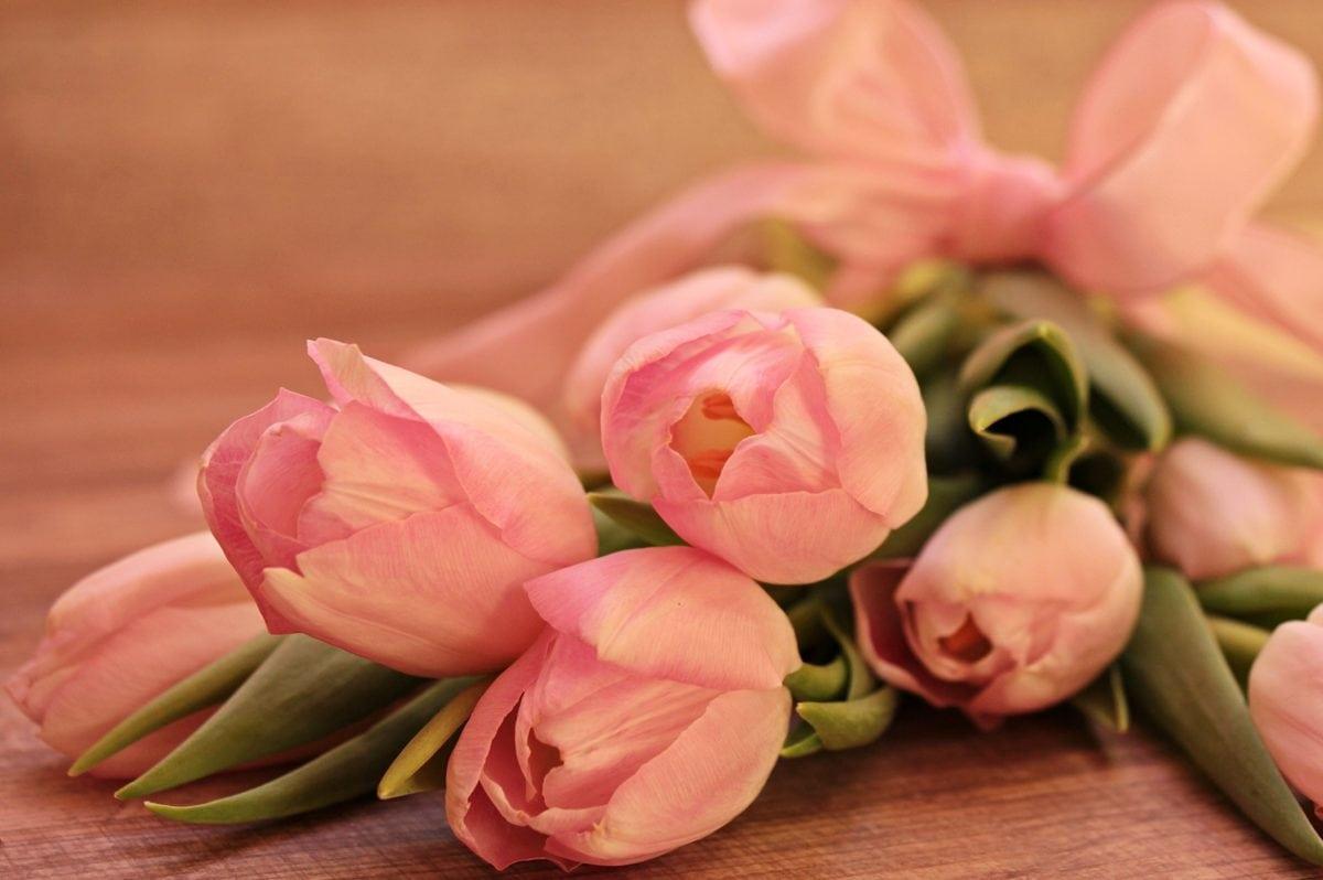 kwiat, róża, różowy, Płatek, aranżacja, roślina