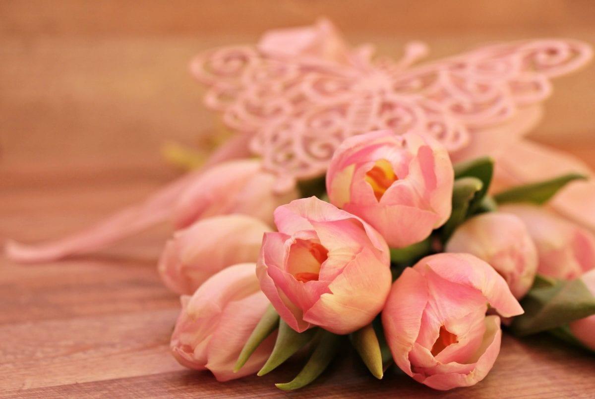cvijet, priroda, ruža, roza, latica, zatvoreni