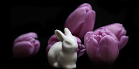tulip, Easter, flower, pink, petal, blossom, bloom, rabbit