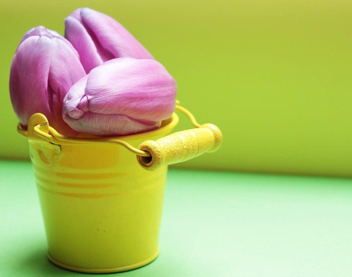 kronblad, blomst, metal, spand, gul