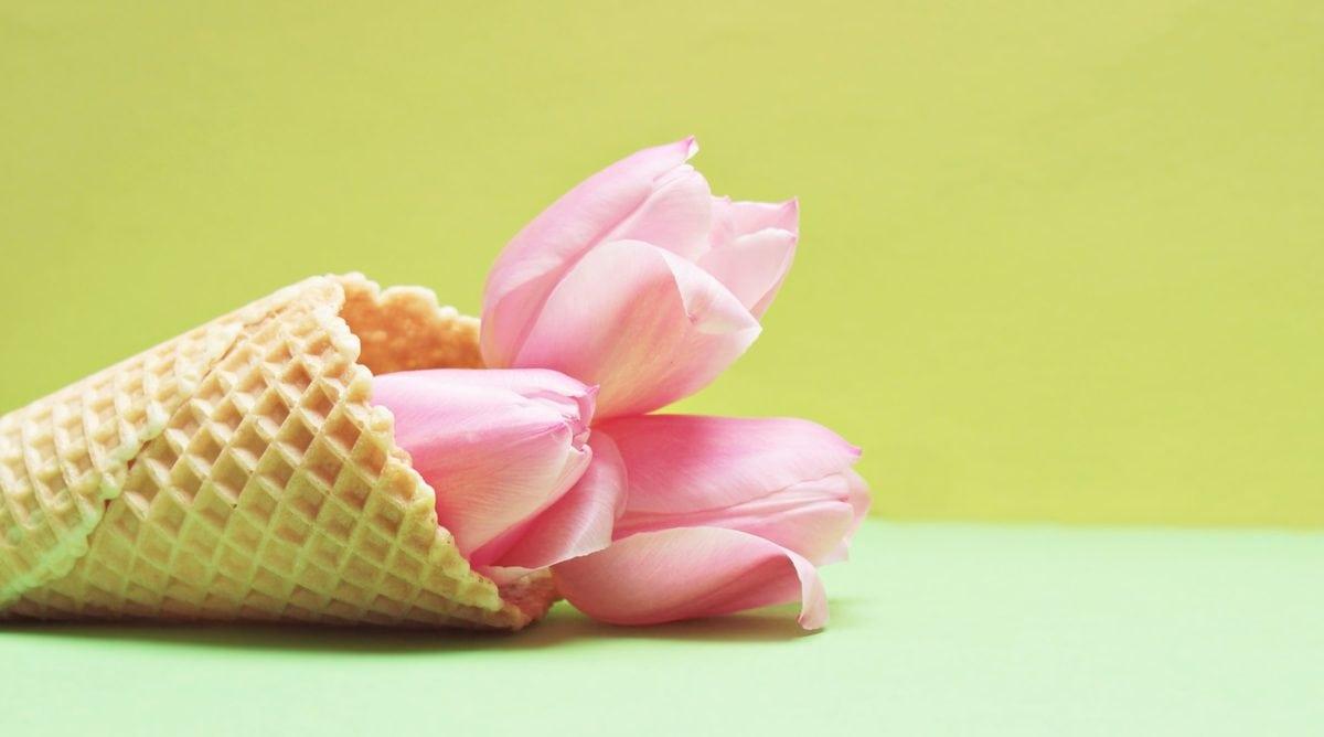 flower, pink tulip, plant, cone, decoration, petal