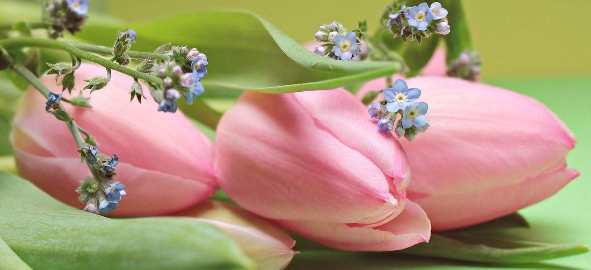цветок, природа, растения, Лепесток, розовый, трава, цвести